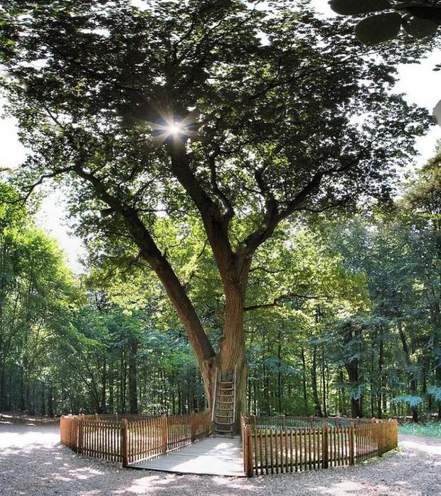 Ngày nào cũng có người mang thư gửi đến cây sồi, đằng sau đó là câu chuyện về những mối nhân duyên cảm động - Ảnh 1.