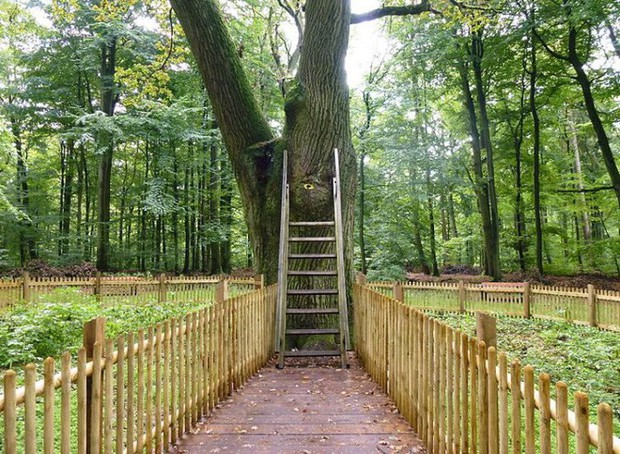 Ngày nào cũng có người mang thư gửi đến cây sồi, đằng sau đó là câu chuyện về những mối nhân duyên cảm động - Ảnh 2.