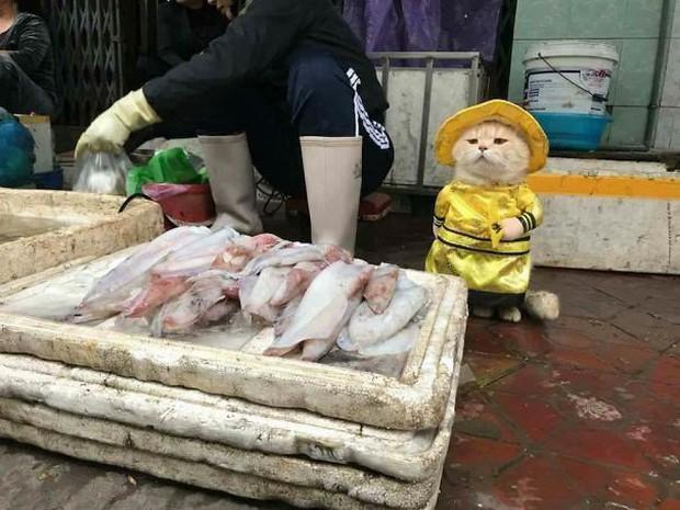 Những chú chó mèo gốc Việt dễ thương trên báo nước ngoài: Mèo trông phản thịt, chó chui tủ lạnh tránh nóng - Ảnh 1.