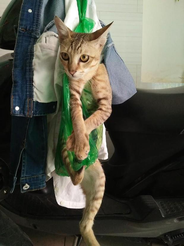 Chùm ảnh: Khi boss quá nghịch mà nhà lại không có lồng thì túi nilon bỗng dưng trở thành thượng sách - Ảnh 2.