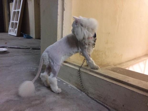 Chùm ảnh: Khi các sen tự húi lông cho boss để đỡ tốn tiền đi spa chó mèo - Ảnh 1.
