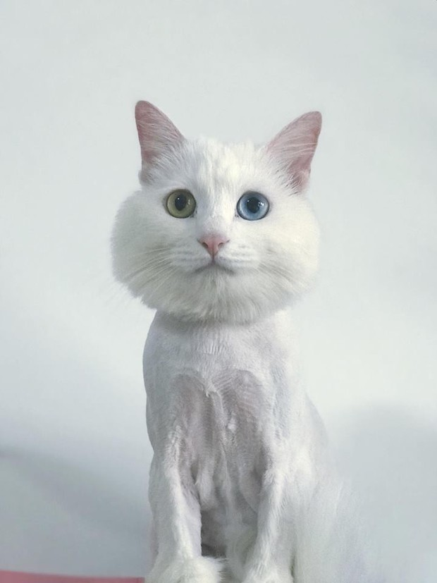Chùm ảnh: Khi các sen tự húi lông cho boss để đỡ tốn tiền đi spa chó mèo - Ảnh 5.