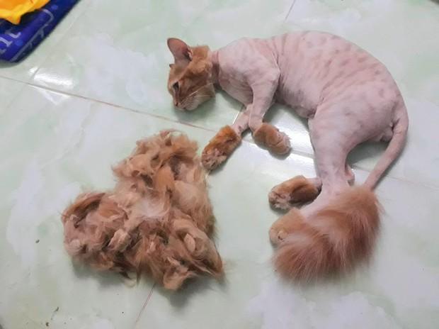 Chùm ảnh: Khi các sen tự húi lông cho boss để đỡ tốn tiền đi spa chó mèo - Ảnh 3.