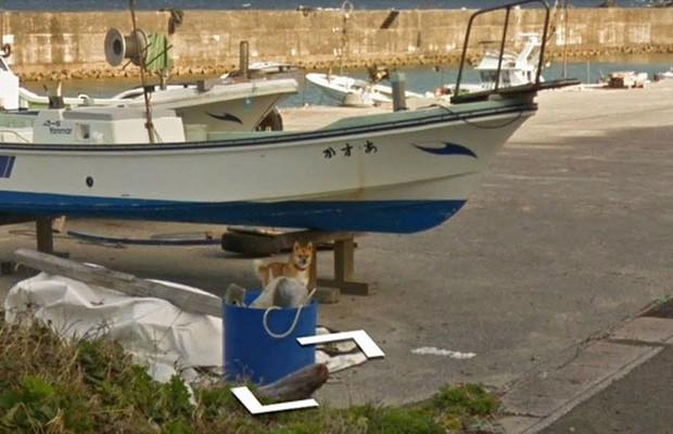 Chú chó tinh nghịch chạy theo xe Google Street View tại Nhật, tấm ảnh nào cũng đòi có mặt khiến cư dân mạng thích thú - Ảnh 2.