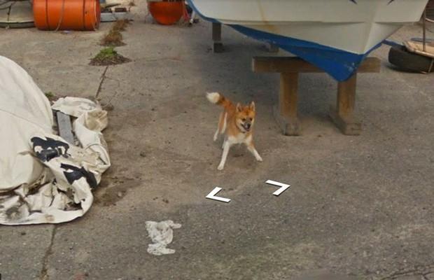 Chú chó tinh nghịch chạy theo xe Google Street View tại Nhật, tấm ảnh nào cũng đòi có mặt khiến cư dân mạng thích thú - Ảnh 3.