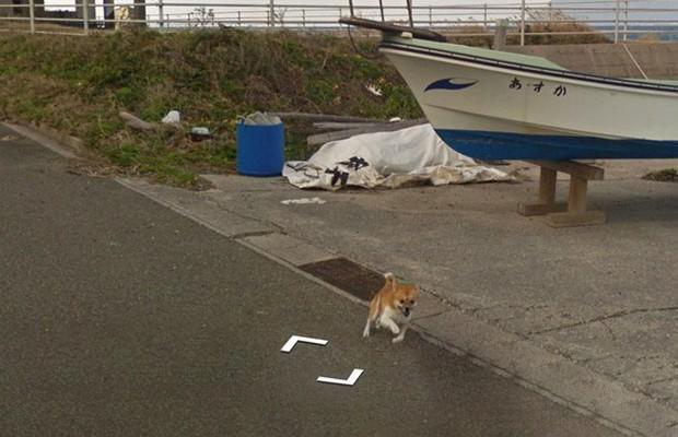 Chú chó tinh nghịch chạy theo xe Google Street View tại Nhật, tấm ảnh nào cũng đòi có mặt khiến cư dân mạng thích thú - Ảnh 4.