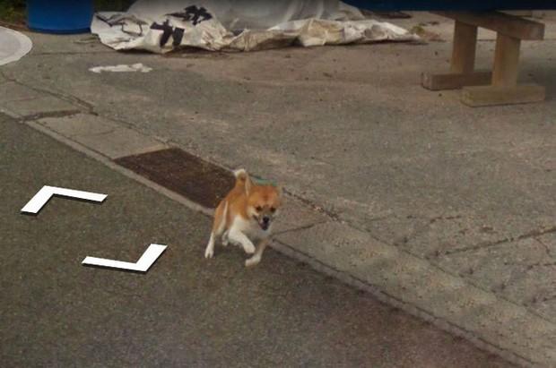 Chú chó tinh nghịch chạy theo xe Google Street View tại Nhật, tấm ảnh nào cũng đòi có mặt khiến cư dân mạng thích thú - Ảnh 5.