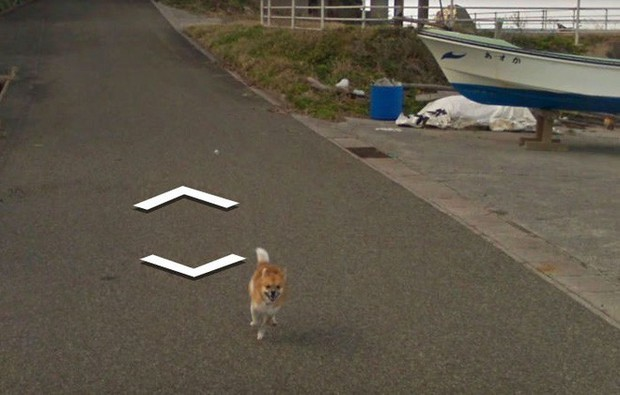Chú chó tinh nghịch chạy theo xe Google Street View tại Nhật, tấm ảnh nào cũng đòi có mặt khiến cư dân mạng thích thú - Ảnh 6.