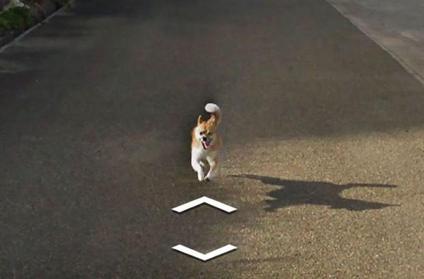 Chú chó tinh nghịch chạy theo xe Google Street View tại Nhật, tấm ảnh nào cũng đòi có mặt khiến cư dân mạng thích thú - Ảnh 7.