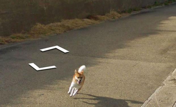 Chú chó tinh nghịch chạy theo xe Google Street View tại Nhật, tấm ảnh nào cũng đòi có mặt khiến cư dân mạng thích thú - Ảnh 8.