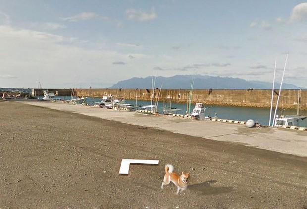 Chú chó tinh nghịch chạy theo xe Google Street View tại Nhật, tấm ảnh nào cũng đòi có mặt khiến cư dân mạng thích thú - Ảnh 9.