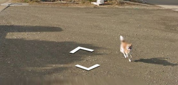 Chú chó tinh nghịch chạy theo xe Google Street View tại Nhật, tấm ảnh nào cũng đòi có mặt khiến cư dân mạng thích thú - Ảnh 10.
