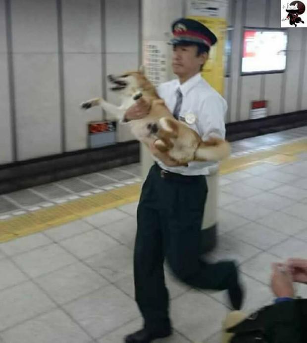 Nhật Bản: Một chú chó bị bảo vệ ga bắt sống vì định nhảy tàu đi chơi mà không mua vé - Ảnh 3.