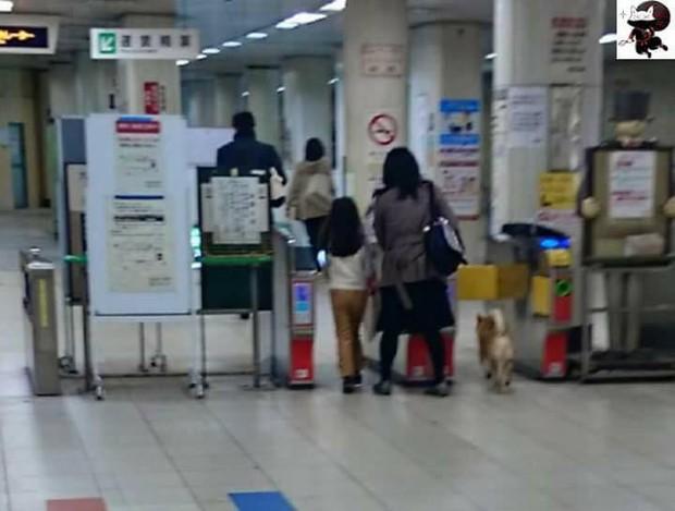 Nhật Bản: Một chú chó bị bảo vệ ga bắt sống vì định nhảy tàu đi chơi mà không mua vé - Ảnh 2.