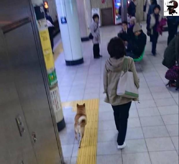 Nhật Bản: Một chú chó bị bảo vệ ga bắt sống vì định nhảy tàu đi chơi mà không mua vé - Ảnh 1.