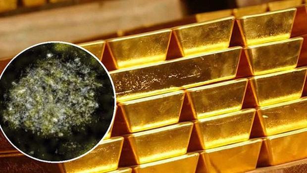 Gà đẻ trứng vàng chỉ có trong cổ tích, còn loại vi khuẩn đẻ ra vàng này là có thật - Ảnh 2.