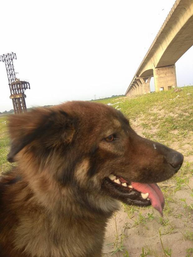 Thanh niên đi thăm mộ chó cưng ở bãi sông Hồng, phát hiện ra mộ biến thành bếp nướng thịt và xung quanh toàn là rác - Ảnh 9.