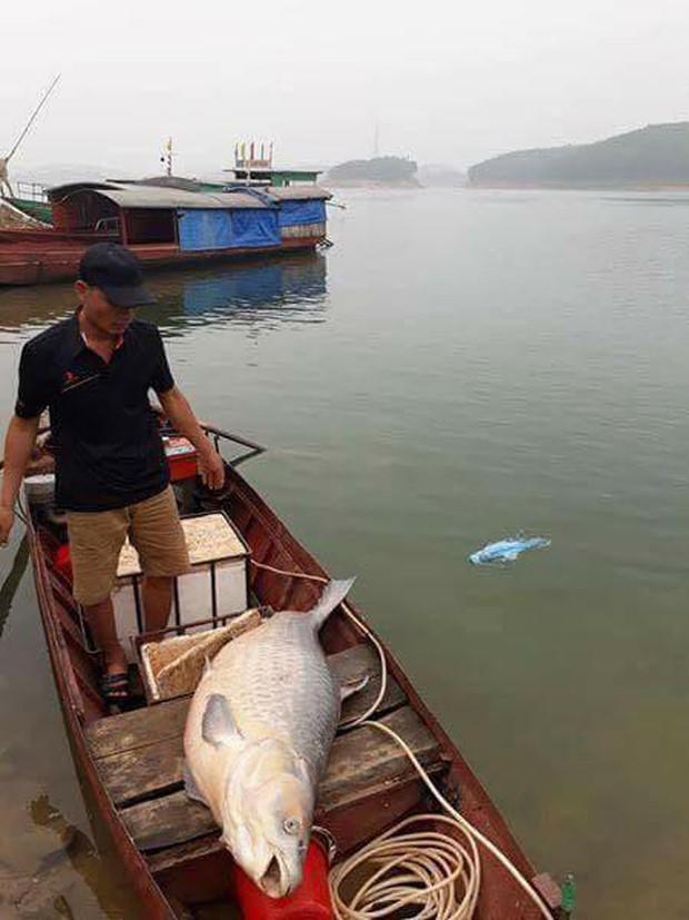 Yên Bái: Ngư dân bắt được cá trắm khổng lồ nặng 61kg ở hồ Thác Bà - Ảnh 2.
