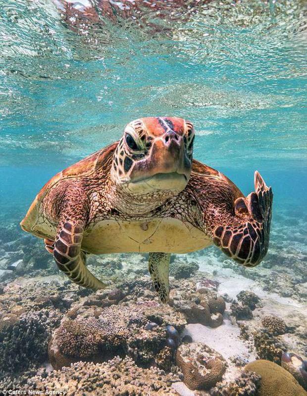 Bức ảnh chú rùa tỏ thái độ trước ống kính gây sốt bất ngờ - Ảnh 1.