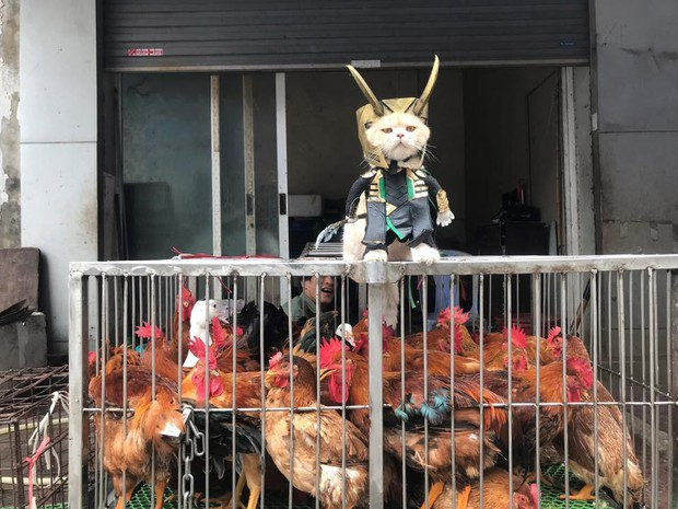 Rũ bỏ hình ảnh hoàng thượng, chú mèo tên Chó hoá thân thành anh hùng Avenger oanh tạc chợ cá Hải Phòng - Ảnh 4.