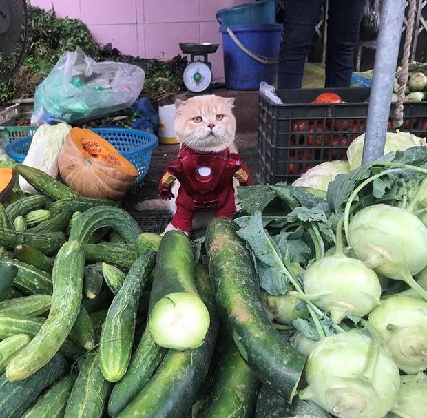 Chú mèo tên Chó lại hóa thân thành siêu anh hùng Avengers, được bạn bè Thái Lan cưng nựng, xuýt xoa hết lời - Ảnh 6.