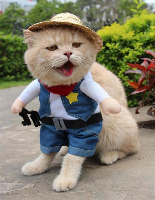 Chú mèo tên Chó lại hóa thân thành siêu anh hùng Avengers, được bạn bè Thái Lan cưng nựng, xuýt xoa hết lời - Ảnh 9.