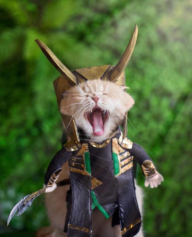 Chú mèo tên Chó lại hóa thân thành siêu anh hùng Avengers, được bạn bè Thái Lan cưng nựng, xuýt xoa hết lời - Ảnh 10.