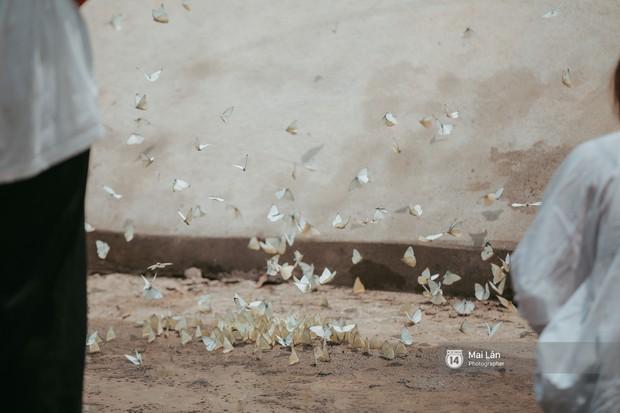 Rừng Cúc Phương vào mùa bướm: Đẹp như một giấc mơ - Ảnh 8.