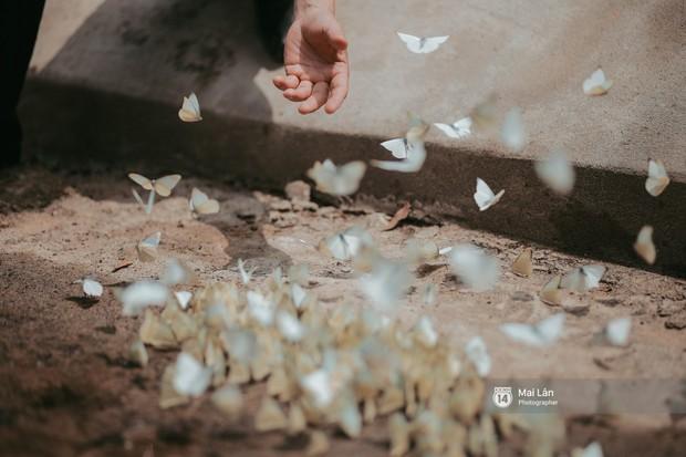 Rừng Cúc Phương vào mùa bướm: Đẹp như một giấc mơ - Ảnh 6.