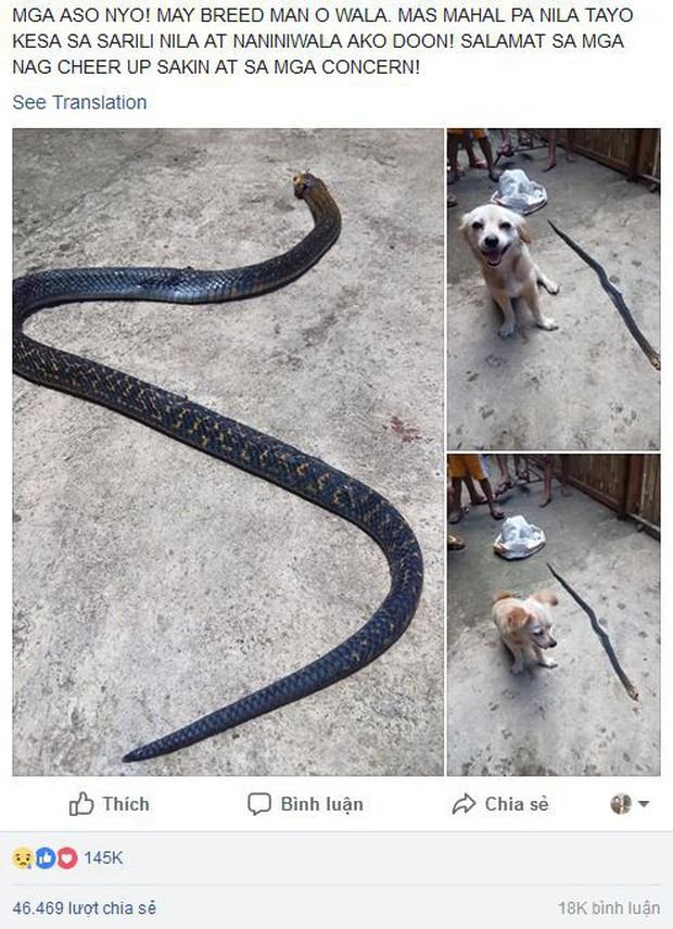 Cô chó dũng cảm cắn chết rắn hổ mang để cứu chủ, nở nụ cười trước khi hi sinh khiến ai cũng phải xúc động - Ảnh 4.