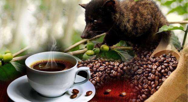 Cafe chồn ngon và đắt nhất thế giới nhưng nghe xong câu chuyện tàn nhẫn này, bạn có còn muốn uống nữa không? - Ảnh 3.