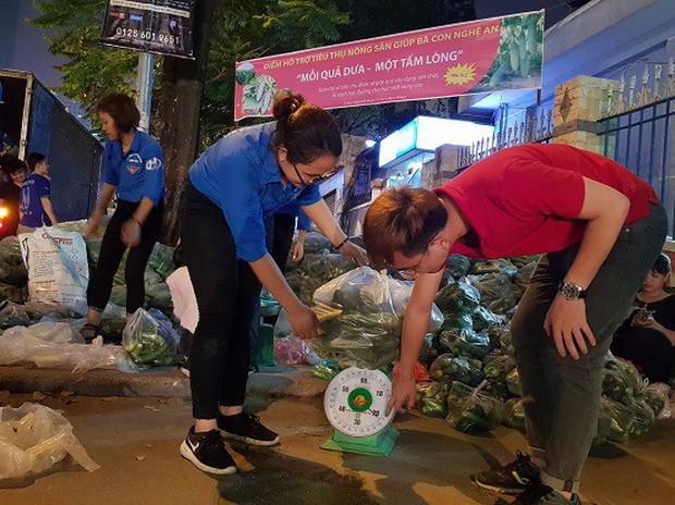 Sinh viên trắng đêm giải cứu dưa chuột giúp nông dân Nghệ An - Ảnh 5.