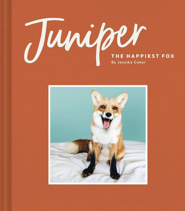 Gặp gỡ Juniper - Con cáo hớn hở nhất thế giới! - Ảnh 6.