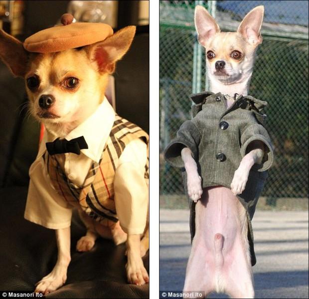"""Bộ ba chú chó """"fashionista"""" khiến cư dân mạng trầm trồ khen ngợi vì gu thời trang quá đỉnh - Ảnh 1."""