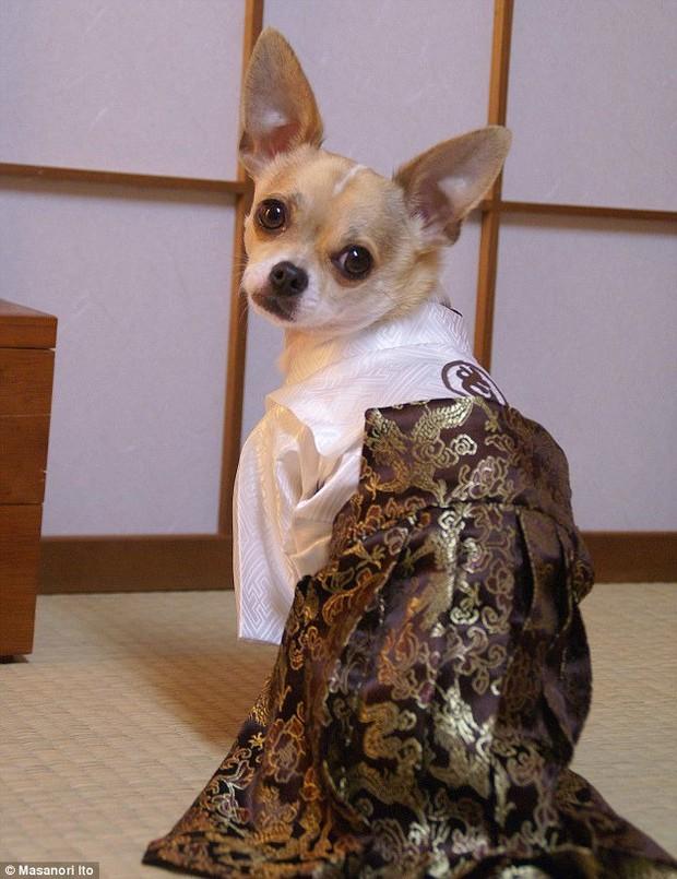 """Bộ ba chú chó """"fashionista"""" khiến cư dân mạng trầm trồ khen ngợi vì gu thời trang quá đỉnh - Ảnh 2."""