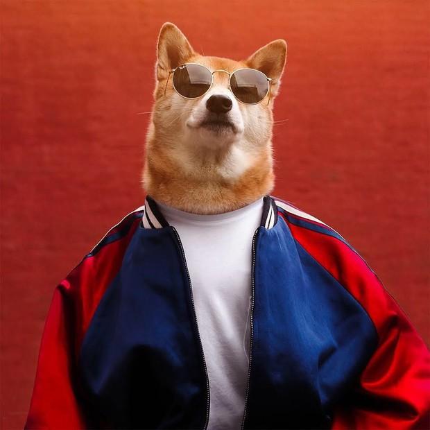 """Bộ ba chú chó """"fashionista"""" khiến cư dân mạng trầm trồ khen ngợi vì gu thời trang quá đỉnh - Ảnh 11."""