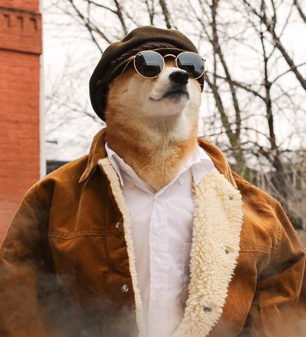 """Bộ ba chú chó """"fashionista"""" khiến cư dân mạng trầm trồ khen ngợi vì gu thời trang quá đỉnh - Ảnh 12."""