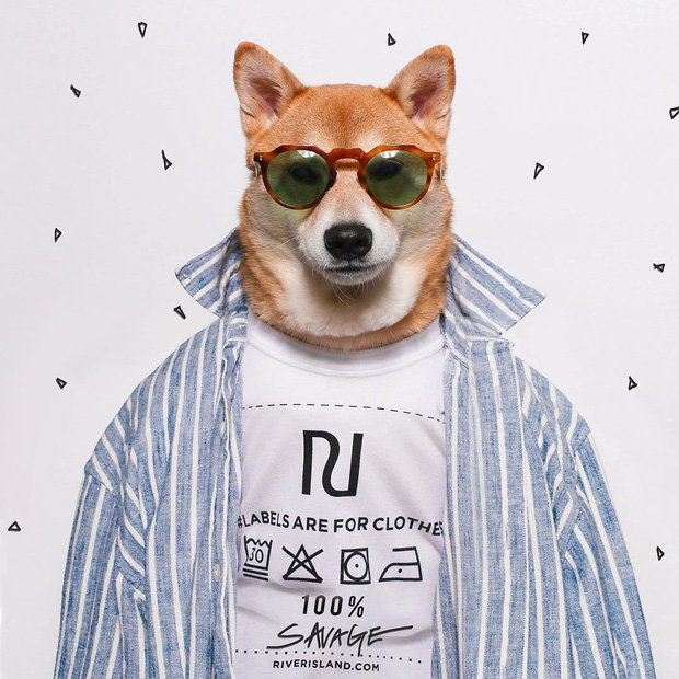 """Bộ ba chú chó """"fashionista"""" khiến cư dân mạng trầm trồ khen ngợi vì gu thời trang quá đỉnh - Ảnh 13."""