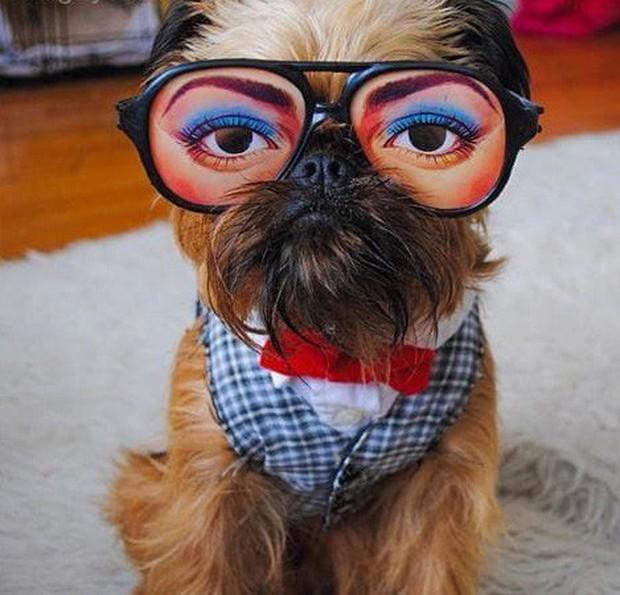 """Bộ ba chú chó """"fashionista"""" khiến cư dân mạng trầm trồ khen ngợi vì gu thời trang quá đỉnh - Ảnh 14."""