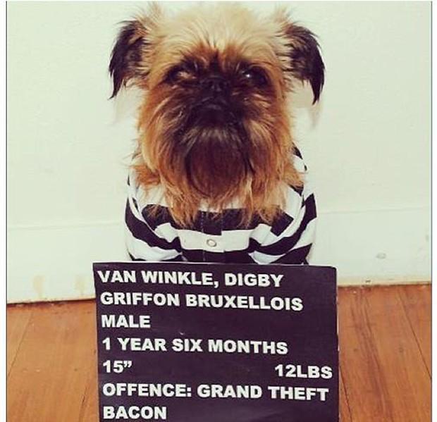 """Bộ ba chú chó """"fashionista"""" khiến cư dân mạng trầm trồ khen ngợi vì gu thời trang quá đỉnh - Ảnh 16."""