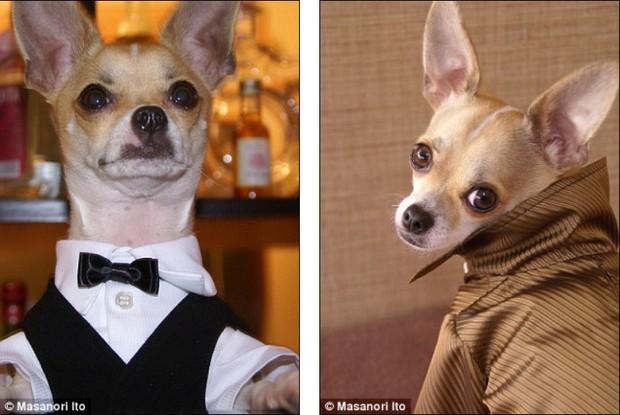 """Bộ ba chú chó """"fashionista"""" khiến cư dân mạng trầm trồ khen ngợi vì gu thời trang quá đỉnh - Ảnh 3."""