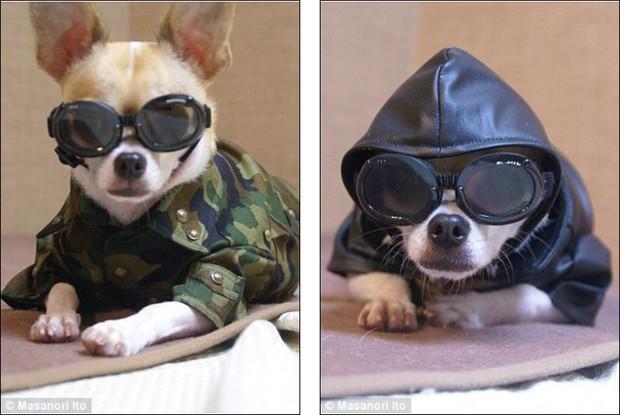 """Bộ ba chú chó """"fashionista"""" khiến cư dân mạng trầm trồ khen ngợi vì gu thời trang quá đỉnh - Ảnh 4."""