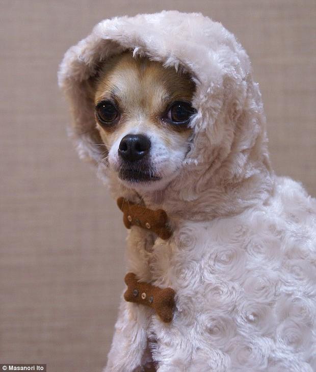 """Bộ ba chú chó """"fashionista"""" khiến cư dân mạng trầm trồ khen ngợi vì gu thời trang quá đỉnh - Ảnh 5."""