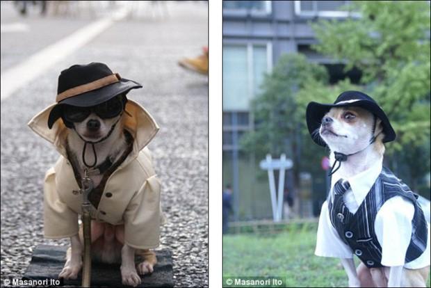 """Bộ ba chú chó """"fashionista"""" khiến cư dân mạng trầm trồ khen ngợi vì gu thời trang quá đỉnh - Ảnh 6."""