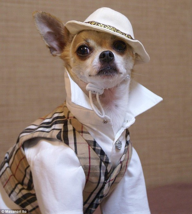 """Bộ ba chú chó """"fashionista"""" khiến cư dân mạng trầm trồ khen ngợi vì gu thời trang quá đỉnh - Ảnh 7."""