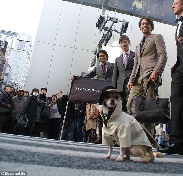 """Bộ ba chú chó """"fashionista"""" khiến cư dân mạng trầm trồ khen ngợi vì gu thời trang quá đỉnh - Ảnh 8."""