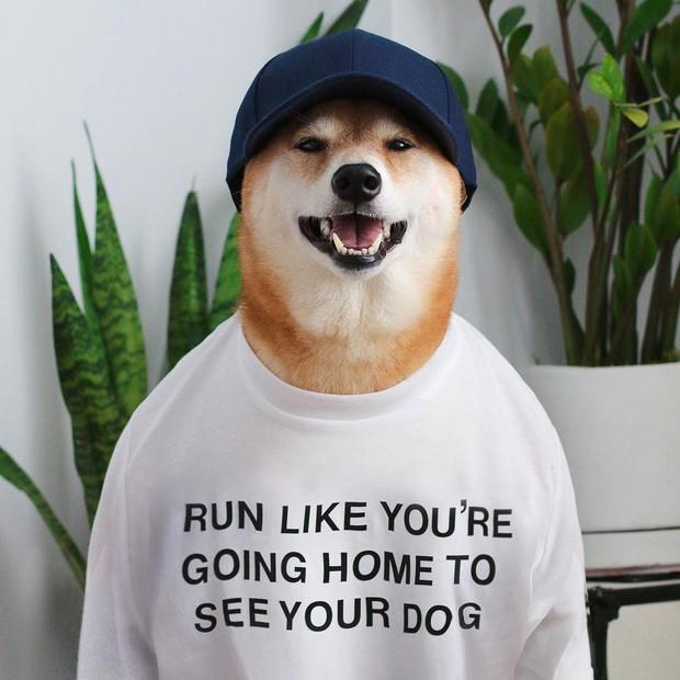 """Bộ ba chú chó """"fashionista"""" khiến cư dân mạng trầm trồ khen ngợi vì gu thời trang quá đỉnh - Ảnh 10."""