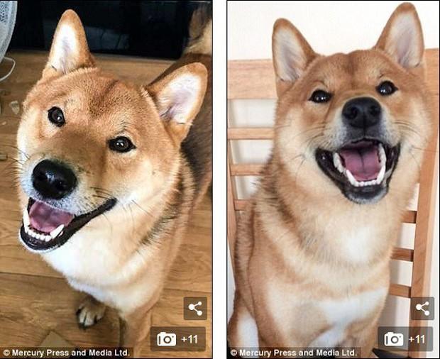 Chú chó cười tươi như hoa, chỉ nhìn mặt em ấy thôi cũng đủ vui cả ngày - Ảnh 4.