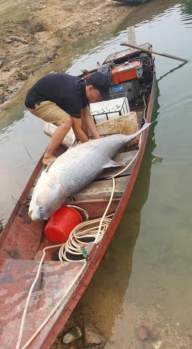"""Cá trắm đen 61kg ở hồ Thác Bà không phải con cá """"khủng"""" duy nhất - Ảnh 2."""