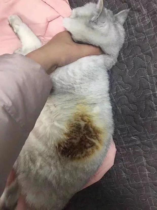 Câu chuyện boss lầy: Đang sưởi thì lăn ra ngủ, chú mèo béo cháy trụi một mảng lông mà không hề hay biết - Ảnh 2.